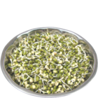 Fresh Sprouts Green Gram/Moong 1 pc