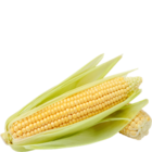 Fresh Sweetcorn 1 pc