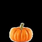 Fresh Pumpkin Disco Red 500 g