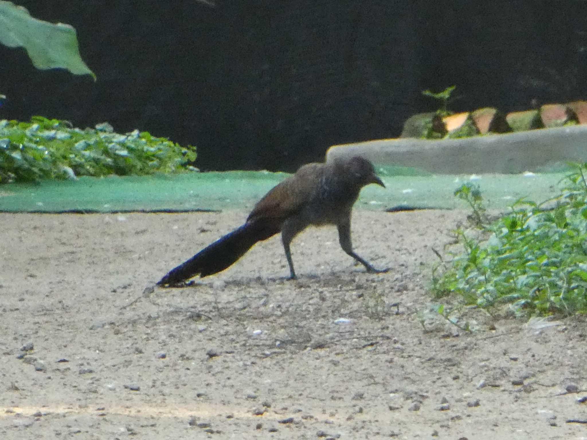 この野鳥の種類を教えてください!