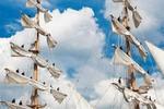 Kleine afbeelding 1 van Verwelkom de Tall Ships