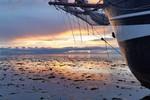 Kleine afbeelding 5 van Dagje zeilen op de Waddenzee