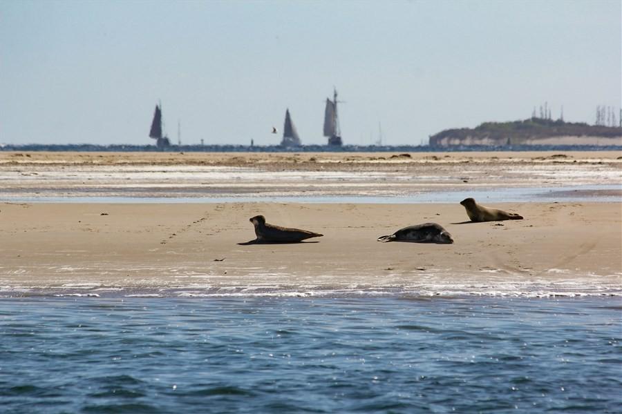 Detailbild von Segelwochenende: Wattenmeer, Inseln & Seehunde