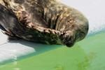 Miniaturansicht 5 von Segelwochenende: Wattenmeer, Inseln & Seehunde